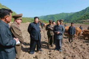 150511 - RS - KIM JONG UN - Genosse KIM JONG UN besuchte die Rinderfarm '18. Juli' - 10 - 경애하는 김정은동지께서 조선인민군 제580군부대산하 7월18일소목장을 현지지도하시였다