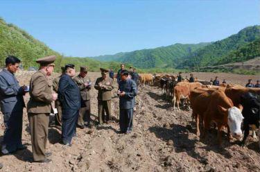 150511 - RS - KIM JONG UN - Genosse KIM JONG UN besuchte die Rinderfarm '18. Juli' - 12 - 경애하는 김정은동지께서 조선인민군 제580군부대산하 7월18일소목장을 현지지도하시였다