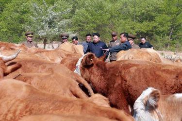 150511 - SK - KIM JONG UN - Genosse KIM JONG UN besuchte die Rinderfarm '18. Juli' - 01 - 경애하는 김정은동지께서 조선인민군 제580군부대산하 7월18일소목장을 현지지도하시였다