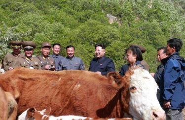 150511 - SK - KIM JONG UN - Genosse KIM JONG UN besuchte die Rinderfarm '18. Juli' - 05 - 경애하는 김정은동지께서 조선인민군 제580군부대산하 7월18일소목장을 현지지도하시였다