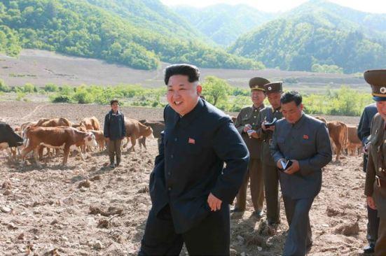 150511 - SK - KIM JONG UN - Genosse KIM JONG UN besuchte die Rinderfarm '18. Juli' - 10 - 경애하는 김정은동지께서 조선인민군 제580군부대산하 7월18일소목장을 현지지도하시였다