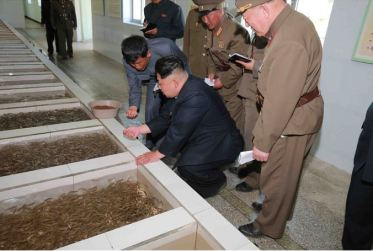 150511 - SK -  KIM JONG UN - Marschall KIM JONG UN besichtigte die Fischzuchtanstalt Anbyon der 580. Truppe der KVA - 10 - 경애하는 김정은동지께서 조선인민군 제580군부대산하 안변양어장을 현지지도하시였다