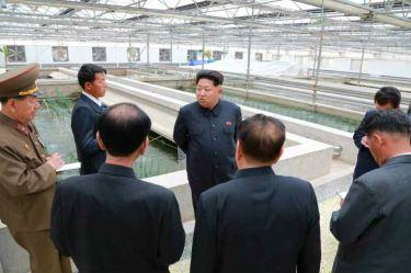 150519 - RS - KIM JONG UN - Marschall KIM JONG UN besuchte den Sumpfschildkrötenzuchtbetrieb Taedonggang - 03 - 경애하는 김정은동지께서 대동강자라공장을 현지지도하시였다
