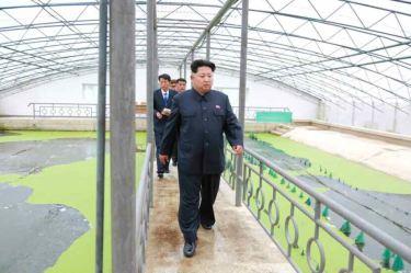 150519 - RS - KIM JONG UN - Marschall KIM JONG UN besuchte den Sumpfschildkrötenzuchtbetrieb Taedonggang - 04 - 경애하는 김정은동지께서 대동강자라공장을 현지지도하시였다