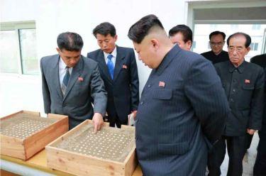 150519 - RS - KIM JONG UN - Marschall KIM JONG UN besuchte den Sumpfschildkrötenzuchtbetrieb Taedonggang - 05 - 경애하는 김정은동지께서 대동강자라공장을 현지지도하시였다