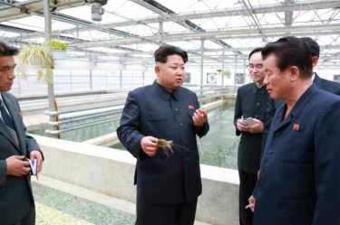 150519 - RS - KIM JONG UN - Marschall KIM JONG UN besuchte den Sumpfschildkrötenzuchtbetrieb Taedonggang - 06 - 경애하는 김정은동지께서 대동강자라공장을 현지지도하시였다