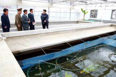 150519 - RS - KIM JONG UN - Marschall KIM JONG UN besuchte den Sumpfschildkrötenzuchtbetrieb Taedonggang - 07 - 경애하는 김정은동지께서 대동강자라공장을 현지지도하시였다
