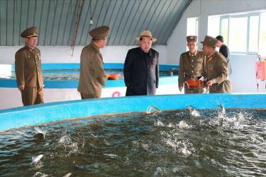 150523 - SK - KIM JONG UN - Marschall KIM JONG UN besichtigte eine Zuchtanstalt für Rassefisch und einen Fischzuchtbetrieb - 06 - 경애하는 김정은동지께서 조선인민군 제810군부대산하 석막대서양연어종어장과 락산바다연어양어사업소를 현지지도하시였다
