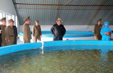 150523 - SK - KIM JONG UN - Marschall KIM JONG UN besichtigte eine Zuchtanstalt für Rassefisch und einen Fischzuchtbetrieb - 07 - 경애하는 김정은동지께서 조선인민군 제810군부대산하 석막대서양연어종어장과 락산바다연어양어사업소를 현지지도하시였다