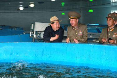 150523 - SK - KIM JONG UN - Marschall KIM JONG UN besichtigte eine Zuchtanstalt für Rassefisch und einen Fischzuchtbetrieb - 08 - 경애하는 김정은동지께서 조선인민군 제810군부대산하 석막대서양연어종어장과 락산바다연어양어사업소를 현지지도하시였다