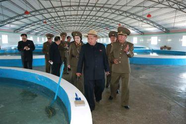 150523 - SK - KIM JONG UN - Marschall KIM JONG UN besichtigte eine Zuchtanstalt für Rassefisch und einen Fischzuchtbetrieb - 44 - 경애하는 김정은동지께서 조선인민군 제810군부대산하 석막대서양연어종어장과 락산바다연어양어사업소를 현지지도하시였다