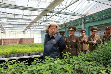 150529 - RS - KIM JONG UN - Marschall KIM JONG UN besuchte die von der Volksarmee neu gestaltete komplexe Baumschule - 01 - 경애하는 김정은동지께서 인민군대에서 새로 꾸리고있는 종합양묘장을 현지지도하시였다