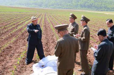 150601 - RS -  KIM JONG UN - Marschall KIM JONG UN besichtigte den Landwirtschaftsbetrieb Nr. 1116 der 810. Truppe der KVA - 03 -경애하는 김정은동지께서 조선인민군 제810군부대산하 1116호농장을 현지지도하시였다