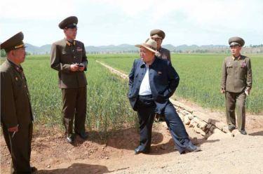 150601 - RS -  KIM JONG UN - Marschall KIM JONG UN besichtigte den Landwirtschaftsbetrieb Nr. 1116 der 810. Truppe der KVA - 09 -경애하는 김정은동지께서 조선인민군 제810군부대산하 1116호농장을 현지지도하시였다