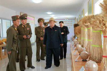 150601 - RS -  KIM JONG UN - Marschall KIM JONG UN besichtigte den Landwirtschaftsbetrieb Nr. 1116 der 810. Truppe der KVA - 11 -경애하는 김정은동지께서 조선인민군 제810군부대산하 1116호농장을 현지지도하시였다