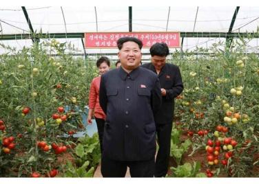 150630 - RS - KIM JONG UN - Genosse KIM JONG UN besuchte den Genossenschaftlichen Landwirtschaftsbetrieb Jangchon für Gemüsebau - 02 - 경애하는 김정은동지께서 사회주의농촌문화건설의 본보기, 기준으로 천지개벽된 평양시 사동구역 장천남새전문협동농장을 현지지도하시였다