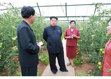150630 - RS - KIM JONG UN - Genosse KIM JONG UN besuchte den Genossenschaftlichen Landwirtschaftsbetrieb Jangchon für Gemüsebau - 06 - 경애하는 김정은동지께서 사회주의농촌문화건설의 본보기, 기준으로 천지개벽된 평양시 사동구역 장천남새전문협동농장을 현지지도하시였다