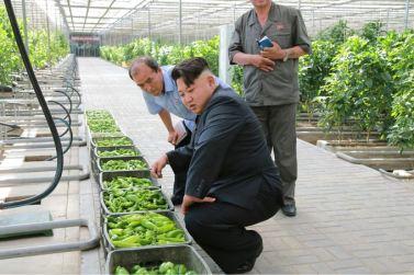 150707 - SK - KIM JONG UN - Marschall KIM JONG UN besichtigte das Wissenschaftliche Institut für Gemüse Pyongyang - 14 - 경애하는 김정은동지께서 평양남새과학연구소를 현지지도하시였다