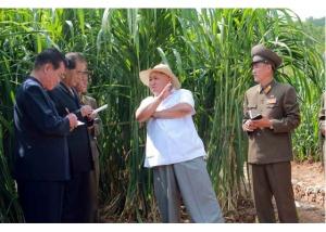 150813 - RS - KIM JONG UN - Marschall KIM JONG UN besichtigte den Landwirtschaftsbetrieb Nr. 1116 der 810. Truppe der KVA - 04 - 경애하는 김정은동지께서 조선인민군 제810군부대산하 1116호농장을 현지지도하시였다