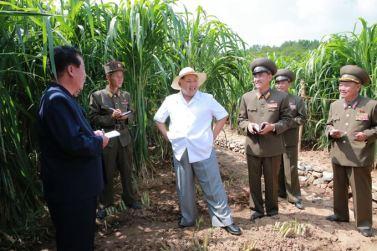 150813 - SK - KIM JONG UN - Marschall KIM JONG UN besichtigte den Landwirtschaftsbetrieb Nr. 1116 der 810. Truppe der KVA - 04 - 경애하는 김정은동지께서 조선인민군 제810군부대산하 1116호농장을 현지지도하시였다