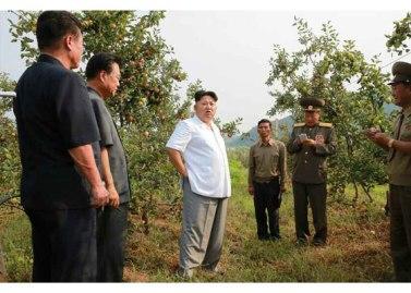 150818 - RS - KIM JONG UN - Marschall KIM JONG UN besuchte das Obstbaukombinat Taedonggang - 05 - 경애하는 김정은동지께서 대동강과수종합농장을 현지지도하시였다
