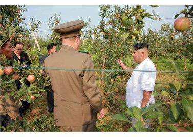 150818 - RS - KIM JONG UN - Marschall KIM JONG UN besuchte das Obstbaukombinat Taedonggang - 07 - 경애하는 김정은동지께서 대동강과수종합농장을 현지지도하시였다