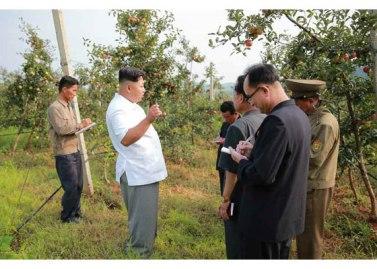 150818 - RS - KIM JONG UN - Marschall KIM JONG UN besuchte das Obstbaukombinat Taedonggang - 08 - 경애하는 김정은동지께서 대동강과수종합농장을 현지지도하시였다