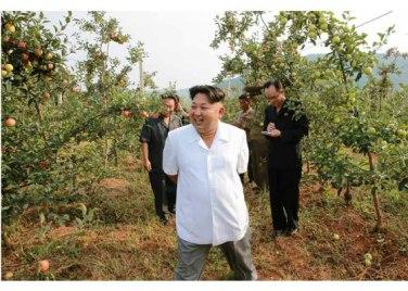 150818 - RS - KIM JONG UN - Marschall KIM JONG UN besuchte das Obstbaukombinat Taedonggang - 09 - 경애하는 김정은동지께서 대동강과수종합농장을 현지지도하시였다