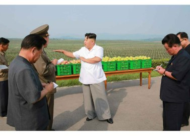 150818 - RS - KIM JONG UN - Marschall KIM JONG UN besuchte das Obstbaukombinat Taedonggang - 11 - 경애하는 김정은동지께서 대동강과수종합농장을 현지지도하시였다