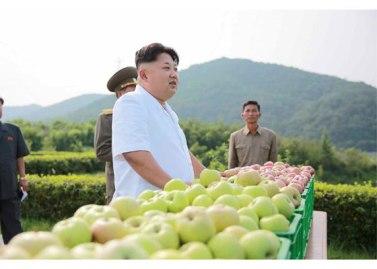 150818 - RS - KIM JONG UN - Marschall KIM JONG UN besuchte das Obstbaukombinat Taedonggang - 12 - 경애하는 김정은동지께서 대동강과수종합농장을 현지지도하시였다