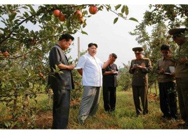 150818 - RS - KIM JONG UN - Marschall KIM JONG UN besuchte das Obstbaukombinat Taedonggang - 15 - 경애하는 김정은동지께서 대동강과수종합농장을 현지지도하시였다