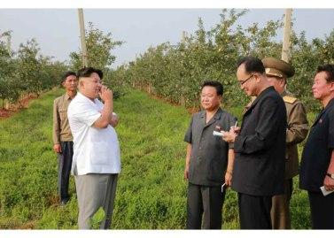 150818 - RS - KIM JONG UN - Marschall KIM JONG UN besuchte das Obstbaukombinat Taedonggang - 17 - 경애하는 김정은동지께서 대동강과수종합농장을 현지지도하시였다