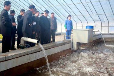 151031 - 조선의 오늘 - KIM JONG UN - Marschall KIM JONG UN besuchte den modernisierten Welszuchtbetrieb Pyongyang - 02 - 경애하는 김정은동지께서 우리 나라 양어부문의 본보기, 표준공장으로 전변된 평양메기공장을 현지지도하시였다