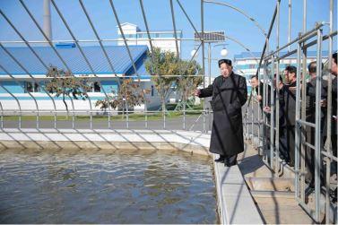 151031 - 조선의 오늘 - KIM JONG UN - Marschall KIM JONG UN besuchte den modernisierten Welszuchtbetrieb Pyongyang - 05 - 경애하는 김정은동지께서 우리 나라 양어부문의 본보기, 표준공장으로 전변된 평양메기공장을 현지지도하시였다