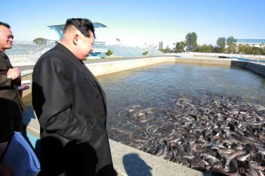151031 - 조선의 오늘 - KIM JONG UN - Marschall KIM JONG UN besuchte den modernisierten Welszuchtbetrieb Pyongyang - 09 - 경애하는 김정은동지께서 우리 나라 양어부문의 본보기, 표준공장으로 전변된 평양메기공장을 현지지도하시였다