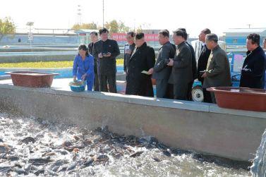 151031 - 조선의 오늘 - KIM JONG UN - Marschall KIM JONG UN besuchte den modernisierten Welszuchtbetrieb Pyongyang - 10 - 경애하는 김정은동지께서 우리 나라 양어부문의 본보기, 표준공장으로 전변된 평양메기공장을 현지지도하시였다