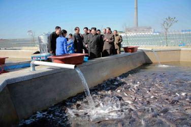 151031 - 조선의 오늘 - KIM JONG UN - Marschall KIM JONG UN besuchte den modernisierten Welszuchtbetrieb Pyongyang - 11 - 경애하는 김정은동지께서 우리 나라 양어부문의 본보기, 표준공장으로 전변된 평양메기공장을 현지지도하시였다