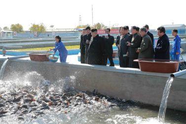 151031 - 조선의 오늘 - KIM JONG UN - Marschall KIM JONG UN besuchte den modernisierten Welszuchtbetrieb Pyongyang - 12 - 경애하는 김정은동지께서 우리 나라 양어부문의 본보기, 표준공장으로 전변된 평양메기공장을 현지지도하시였다