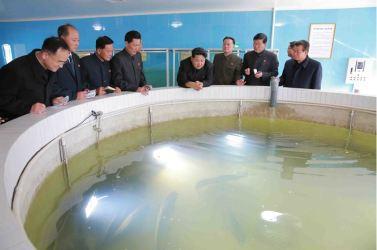 151031 - 조선의 오늘 - KIM JONG UN - Marschall KIM JONG UN besuchte den modernisierten Welszuchtbetrieb Pyongyang - 14 - 경애하는 김정은동지께서 우리 나라 양어부문의 본보기, 표준공장으로 전변된 평양메기공장을 현지지도하시였다