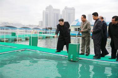 151118 - 조선의 오늘 - KIM JONG UN - Marschall KIM JONG UN besichtigte die mobilen Fischzuchtnetze im Fluss Taedong - 05 - 경애하는 김정은동지께서 대동강에 새로 설치한 이동식그물우리양어장을 현지지도하시였다