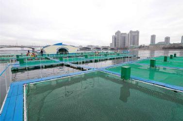 151118 - 조선의 오늘 - KIM JONG UN - Marschall KIM JONG UN besichtigte die mobilen Fischzuchtnetze im Fluss Taedong - 10 - 경애하는 김정은동지께서 대동강에 새로 설치한 이동식그물우리양어장을 현지지도하시였다