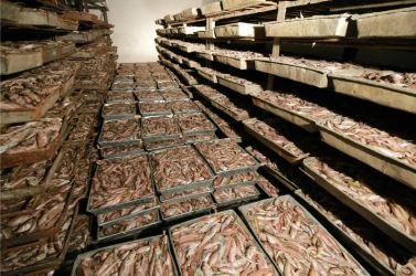 151125 - RS - KIM JONG UN - Marschall KIM JONG UN besichtigte den Fischereibetrieb Nr. 15 der 549. Truppe der KVA - 15 - 경애하는 김정은동지께서 조선인민군 제549군부대관하 15호수산사업소를 현지지도하시였다