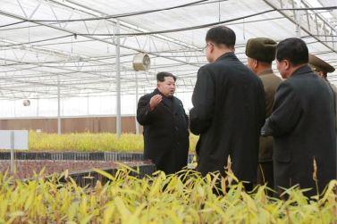 151203 - 조선의 오늘 - KIM JONG UN - Marschall KIM JONG UN besichtigte die Baumschule Nr. 122 der KVA - 01 - 경애하는 김정은동지께서 조선인민군 122호양묘장을 현지지도하시고 지식경제시대의 요구에 맞게 양묘장을 현대화할데 대한 과업을 제시하시였다