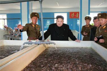 151212 - 조선의 오늘 - KIM JONG UN - Genosse KIM JONG UN besuchte den Welszuchtbetrieb '9. Mai' - 03 - 경애하는 김정은동지께서 양어의 과학화, 집약화, 공업화가 높은 수준에서 실현된 5월9일메기공장을 현지지도하시였다