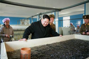 151212 - 조선의 오늘 - KIM JONG UN - Genosse KIM JONG UN besuchte den Welszuchtbetrieb '9. Mai' - 04 - 경애하는 김정은동지께서 양어의 과학화, 집약화, 공업화가 높은 수준에서 실현된 5월9일메기공장을 현지지도하시였다