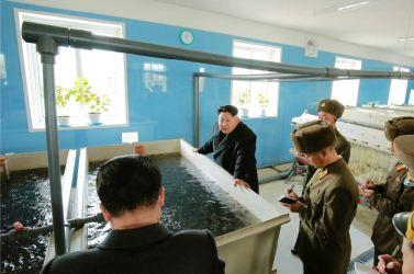 151212 - 조선의 오늘 - KIM JONG UN - Genosse KIM JONG UN besuchte den Welszuchtbetrieb '9. Mai' - 05 - 경애하는 김정은동지께서 양어의 과학화, 집약화, 공업화가 높은 수준에서 실현된 5월9일메기공장을 현지지도하시였다
