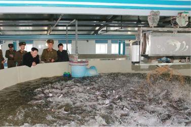 151212 - 조선의 오늘 - KIM JONG UN - Genosse KIM JONG UN besuchte den Welszuchtbetrieb '9. Mai' - 07 - 경애하는 김정은동지께서 양어의 과학화, 집약화, 공업화가 높은 수준에서 실현된 5월9일메기공장을 현지지도하시였다
