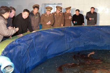 151216 - 조선의 오늘 - KIM JONG UN - Marschall KIM JONG UN besichtigte den Welszuchtbetrieb Samchon - 05 - 경애하는 김정은동지께서 삼천메기공장을 현지지도하시고 세계적수준의 메기공장으로 전변시킬데 대한 과업을 제시하시였다