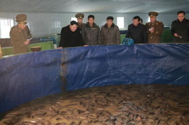 151216 - 조선의 오늘 - KIM JONG UN - Marschall KIM JONG UN besichtigte den Welszuchtbetrieb Samchon - 06 - 경애하는 김정은동지께서 삼천메기공장을 현지지도하시고 세계적수준의 메기공장으로 전변시킬데 대한 과업을 제시하시였다