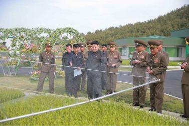 160515 - 조선의 오늘 - KIM JONG UN - Marschall KIM JONG UN besuchte die Baumschule Nr. 122 der KVA - 05 - 경애하는 김정은동지께서 지식경제시대의 요구에 맞게 과학화, 공업화, 집약화가 훌륭히 실현된 조선인민군 122호양묘장을 현지지도하시였다